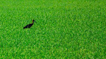 Vogelbeobachtung im Ebrodelta